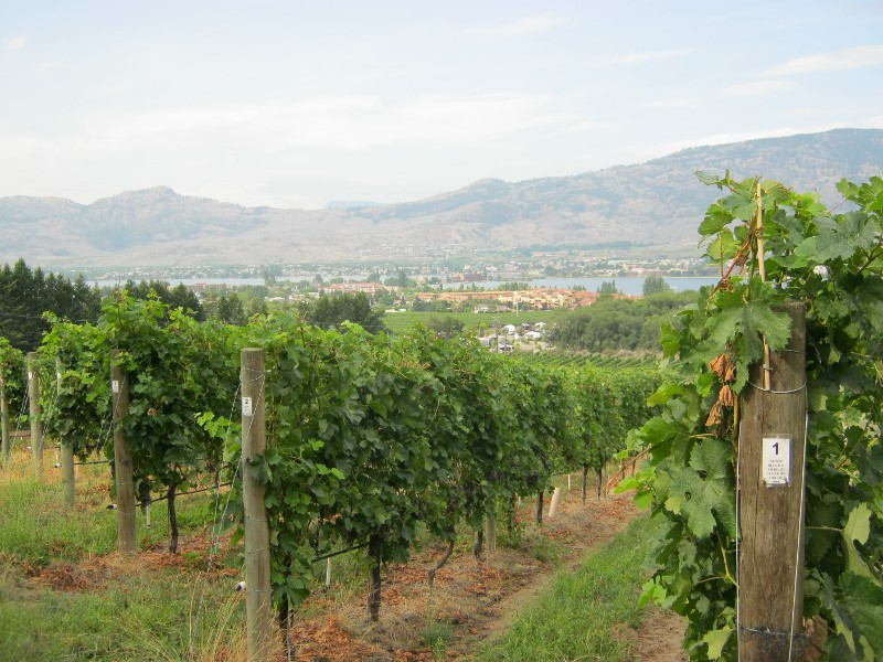 Nk'Mip vineyards