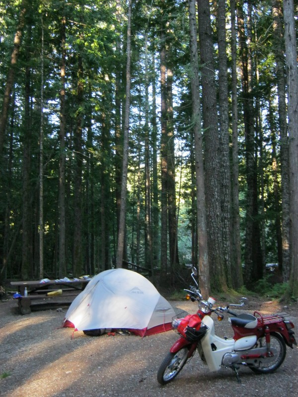 Campsite with Symba and tent at Cal-cheak forestry site