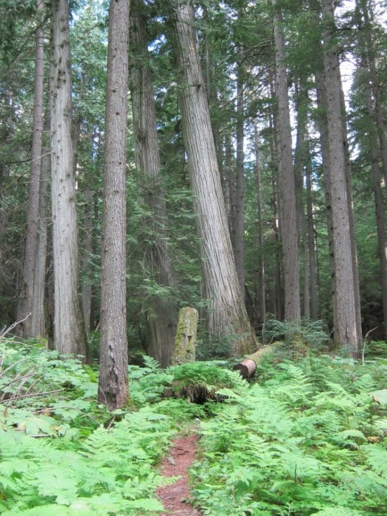 Nakusp forest trail
